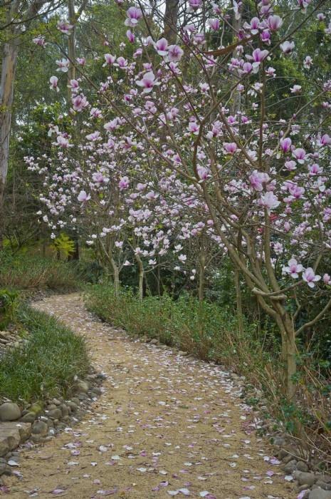 Magnolia, September