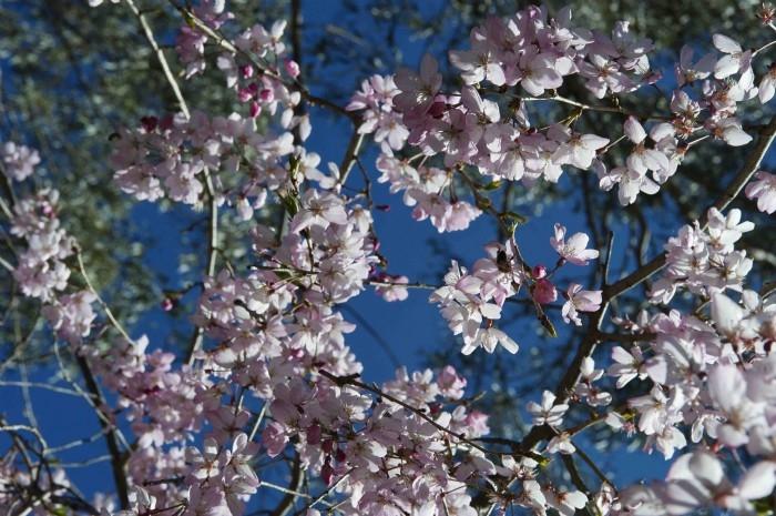 Blossom, October